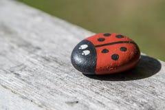 Uma pedra do besouro de senhora no sol do verão imagem de stock royalty free