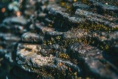 Uma pedra do estrato com algum musgo imagem de stock royalty free
