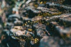 Uma pedra do estrato com algum musgo fotos de stock