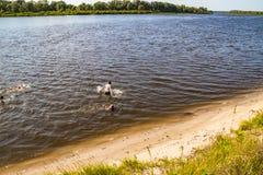Uma pessoa conduz um estilo de vida saudável e nadadas no rio imagem de stock