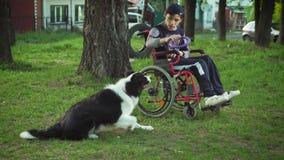 Uma pessoa deficiente joga com um cão, terapia do canitis, tratamento da inabilidade com o treinamento com um cão, homem na vídeos de arquivo