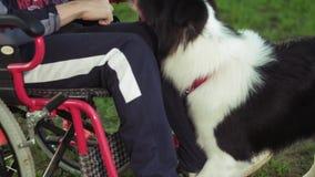 Uma pessoa deficiente joga com um cão, terapia do canitis, tratamento da inabilidade com o treinamento com um cão, homem na filme