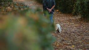 Uma pessoa que anda em cães do whit do parque