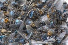 Uma pilha da casa inoperante voa, insecticida do conceito Fotografia de Stock