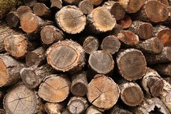 Uma pilha da madeira imagens de stock