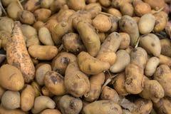 Uma pilha das batatas Imagens de Stock
