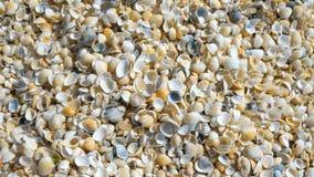 Uma pilha das conchas do mar na praia video estoque