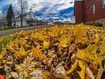 Uma pilha das folhas alaranjadas imagem de stock royalty free