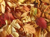 Uma pilha das folhas secas. Imagens de Stock Royalty Free