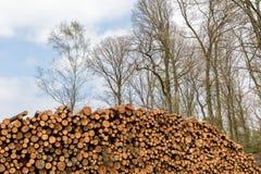 Uma pilha de árvores abatidas em uma floresta Foto de Stock Royalty Free