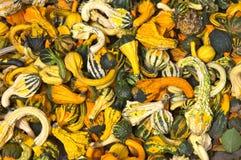 Uma pilha de abóboras coloridas imagem de stock