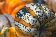 Uma pilha de abóboras coloridas fotografia de stock royalty free