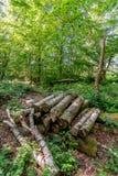 Uma pilha de logs cortados é empilhada entre as folhas e o und caídos Foto de Stock Royalty Free