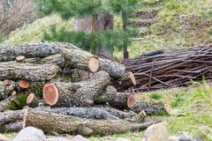 Uma pilha de logs naturais com casca Foto de Stock
