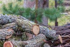 Uma pilha de logs naturais com casca Fotos de Stock