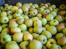 Uma pilha de maçãs verdes com destaques vermelhos Imagens de Stock Royalty Free