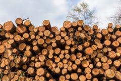 Uma pilha de troncos de árvore abatidos Imagens de Stock Royalty Free