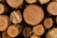Uma pilha de troncos de árvore abatidos Foto de Stock Royalty Free