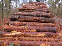 Uma pilha de troncos de árvore vistos em cores bonitas do outono Fotografia de Stock Royalty Free
