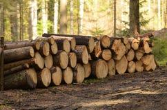Uma pilha de troncos de árvore cortados Foto de Stock Royalty Free