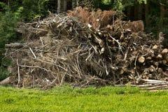 Uma pilha de uma madeira Fotos de Stock