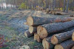 Uma pilha do pinho entra os cortes da floresta fotografia de stock