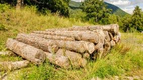Uma pilha do tronco foto de stock royalty free