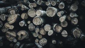Uma pilha dos logs reduziu em uma floresta imagem de stock royalty free