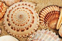 Uma pilha dos seashells Fotos de Stock