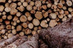 Uma pilha empilhada da madeira marrom na floresta Fotos de Stock
