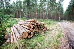 Uma pilha grande da madeira em uma estrada de floresta Imagem de Stock