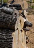 Uma pilha grande dos logs Foto de Stock Royalty Free