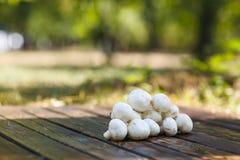 Uma pilha pequena dos cogumelos em um fundo de madeira marrom fotografia de stock royalty free