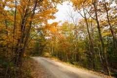 Uma pista do país passa através das árvores do outono foto de stock