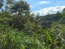 Uma plantação de café indonésia com uma ideia da parte da plantação imagens de stock