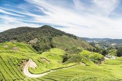Uma plantação de chá em Cameron Highlands imagens de stock royalty free
