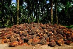 Uma plantação do óleo de palma em Malásia imagens de stock