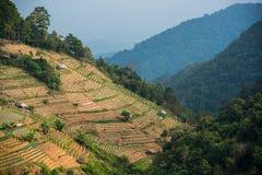 Uma plantação em um monte com fundo da montanha fotografia de stock royalty free