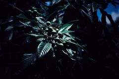 Uma planta bonita em uma obscuridade imagem de stock
