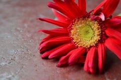 Uma planta colorida no campo Fotos de Stock