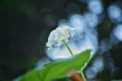Uma planta com flor florescida fotografia de stock royalty free
