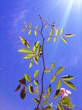 Uma planta com sol forte e o céu azul Fotos de Stock Royalty Free