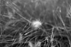 Uma planta com terra e grama Fotografia de Stock Royalty Free