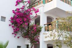 Uma planta cor-de-rosa do oleandro imagem de stock royalty free