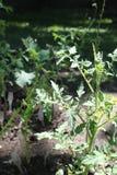 Uma planta de tomate cercada por amigos foto de stock