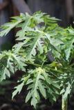Uma planta durante uma temporada de ver?o foto de stock