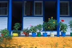 Uma planta e uma cor pequenas florescem na frente da porta da sala Imagem de Stock