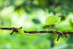Uma planta em cercar o fio fotos de stock royalty free