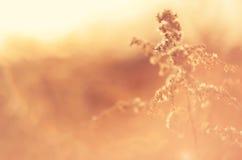 Uma planta na luz solar Planta no embaçamento Imagens de Stock Royalty Free