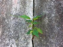 Uma planta na parede foto de stock